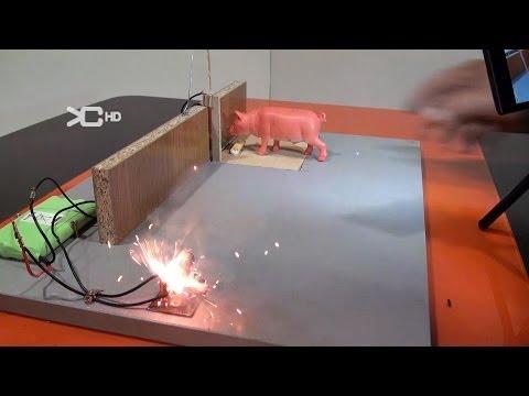 Cazar rata con un petardo Experimentos Caseros
