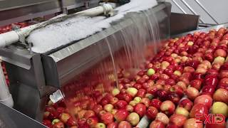 Touring an Apple Packing Facility | How Do they do it