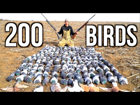 Xxx Mp4 SHOOTING 200 Pigeons Kansas Pigeon Hunting 2017 3gp Sex