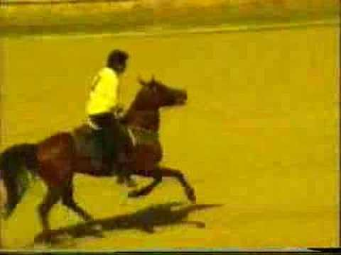 1995 cirit bayburt erzurum en güzel cirit atı maradona