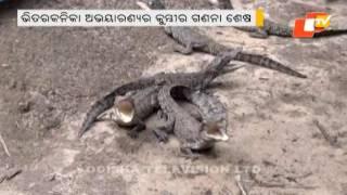 Crocodile Census