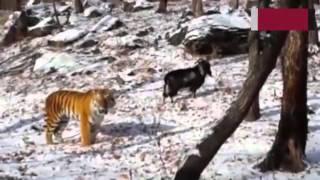 Wonderful Friendships In The Animal World