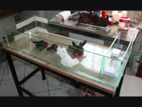 Filtre filtration décantation aquarium