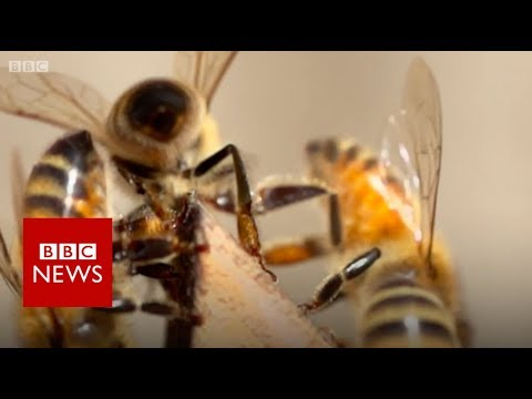 Xxx Mp4 Bees Living On Top Of A London Mosque BBC News 3gp Sex