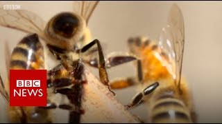 Bees living on top of a London mosque - BBC News