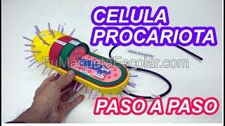 Como hacer la Celula Procariota / tutorial