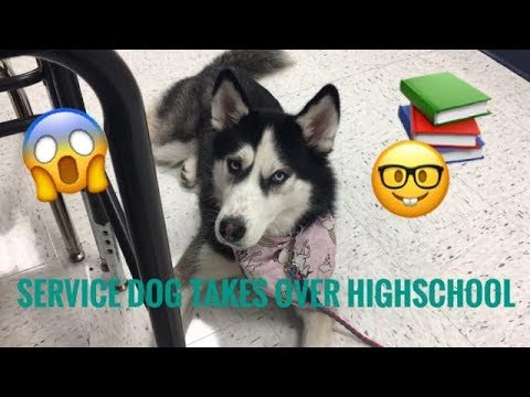Xxx Mp4 SERVICE DOGS FIRST DAY AT HIGHSCHOOL 3gp Sex