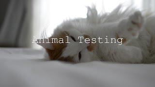 Animal Testing Documentary