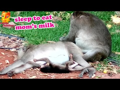 Xxx Mp4 Baby Monkey Sleep To Eat Mom S Milk 3gp Sex