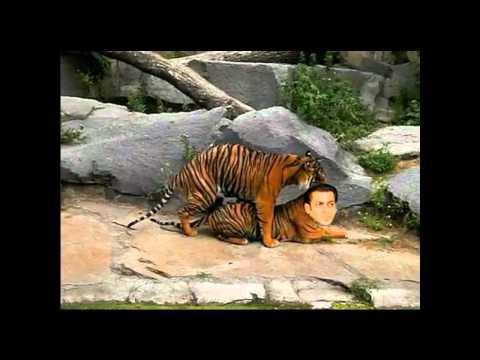 ek tha tiger rape scene