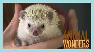 Meet and Greet: Prickle the Hedgehog