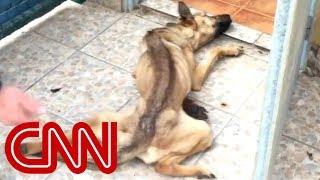 See abandoned dog's amazing transformation