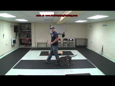 How to Train a Dog to Heel - Dog Training by K9-1.com