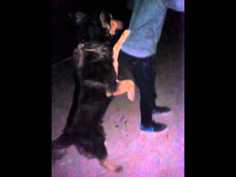 Dog mating a human