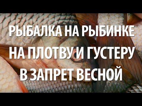 запрет на ловля плотвы весной на