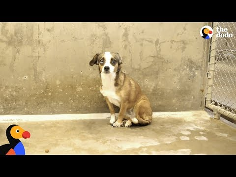 Scared Dog Never Wagged Her Tail Until She Met Her Foster Dad BLOSSOM The Dodo