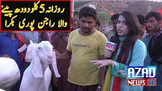 Daily  5 litter drink Milk that this Bakra | Lahore mandi bakra2018