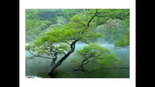 Bhojpuri album javed