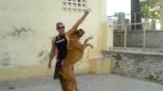 Tarifa city dog boxer Yako.3gp