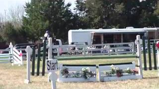Ellorree Show Jumping - Horse for Sale