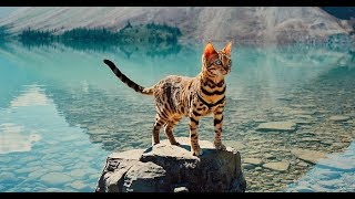 Meet Suki The Traveling Cat Who's Living A Better Life Than You !