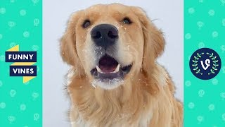 TRY NOT TO LAUGH & AWWW - Cute Dogs Videos | Golden Retriever Compilation | Funny Vine April 2018