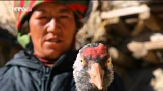 أفلام وثائقية: سقف العالم 2016-04-02