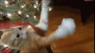 Cat freaks out over Christmas Tree