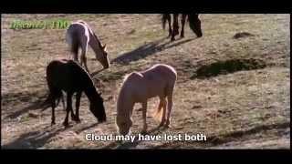 Nature a horse documentary - english subtitles