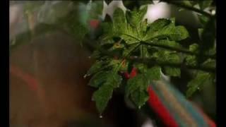 Grameen Phone TV commercials - Opekkha