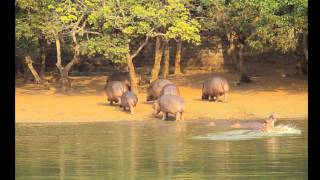 NandanKanan Zoo, Bhubaneshwar