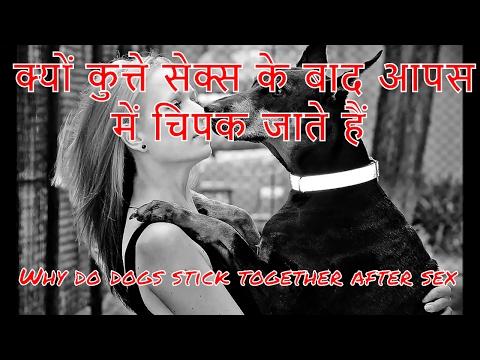 Xxx Mp4 क्यों कुत्ते सेक्स के दौरान आपस में चिपक जाते है Why Dogs Get Stuck After Mating 3gp Sex