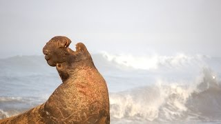 QUEST: Dive with Elephant Seals