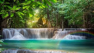Crystal Forest Meditation A  guided meditation journey