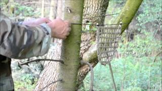 How to Make a Bird Trap