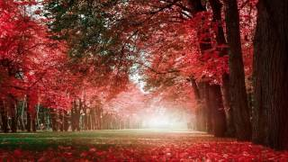 Relax music 2017 - Beautiful Chinese Music 17 Traditional The Red Plum Blossoms