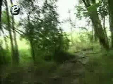 Extraño animal apareció en Río Negro