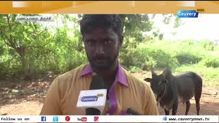நெருங்கும் ஜல்லிக்கட்டு: தயாராகும் காளைகள் !! | Jallikattu | Alanganallur Jallikattu