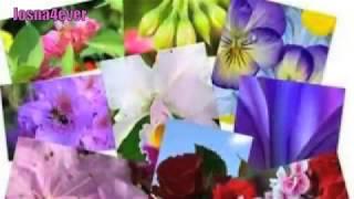 Bangla Song ~ Ai Jibone By Afrin Rumey & Porshi ~ Bangla Music Video