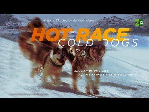 Xxx Mp4 Hot Race Cold Dogs 2 100 Km By Dog Sled Across Kamchatka's Wild Tundra 3gp Sex