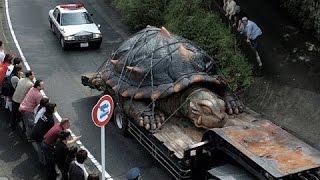 10حيوانات ضخمة بطريقة غير عادية .. !!