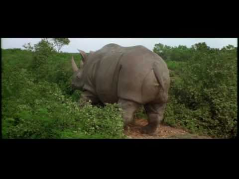 Rhino gives birth to human