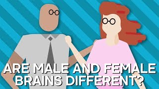 Are Male And Female Brains Different? - Earth Lab