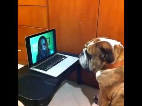 Best vines perro jugando laberinto del terror