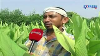 Farmers of Tunguru Village Natural farming Success stories || paadi pantalu - Express TV