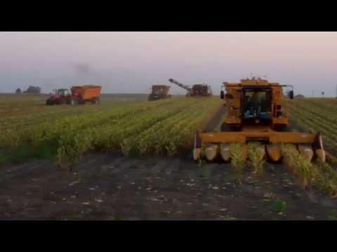 NTR 2013 Harvest McLean IL