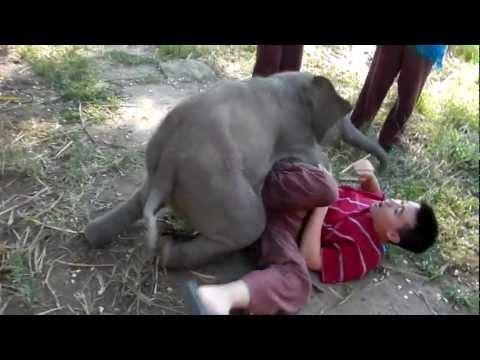 Xxx Mp4 Baby Elephant Loves Cuddling With Arthur Original 3gp Sex