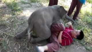 Baby Elephant Loves Cuddling with Arthur (Original)