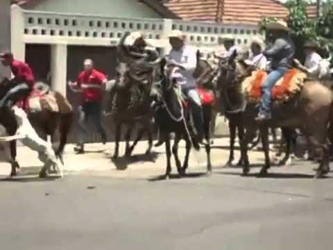 Policial atira e mata pit bull durante cavalgada no MS