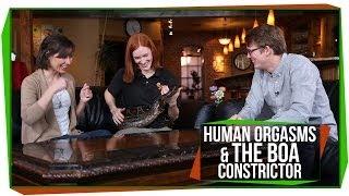 Talk Show: Human Orgasms & Daisy, the Boa Constrictor